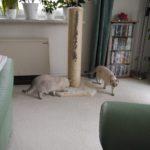 Grosser Sisalstamm für Katzen