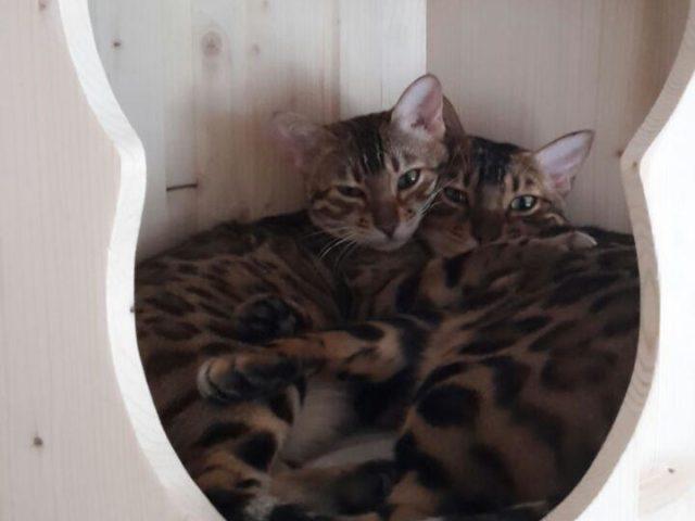 Höhle für Katzen aus Holz
