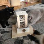 Leckerliebox für Katzen
