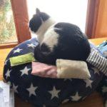 Kissen gross für Katzen