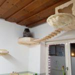 Katzenlandschaften