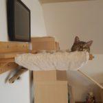 Hängematte für Katzen mit Holzhalterung
