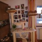 Individuelle Sonderanfertigung für Katzen