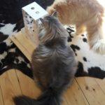 Intelligenzturm für Katzen