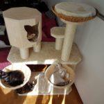 Kratzbaum gigant für viele Katzen