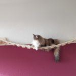 Wandhalterung mit Hängematte für Katzen