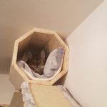 Katzentunnel mit Kissen
