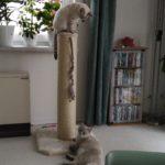 Sisalstämme für Katzen