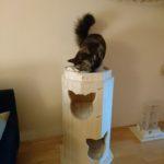 XXL Tonne für Katzen