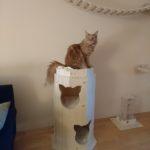 Kratztonne für Katzen