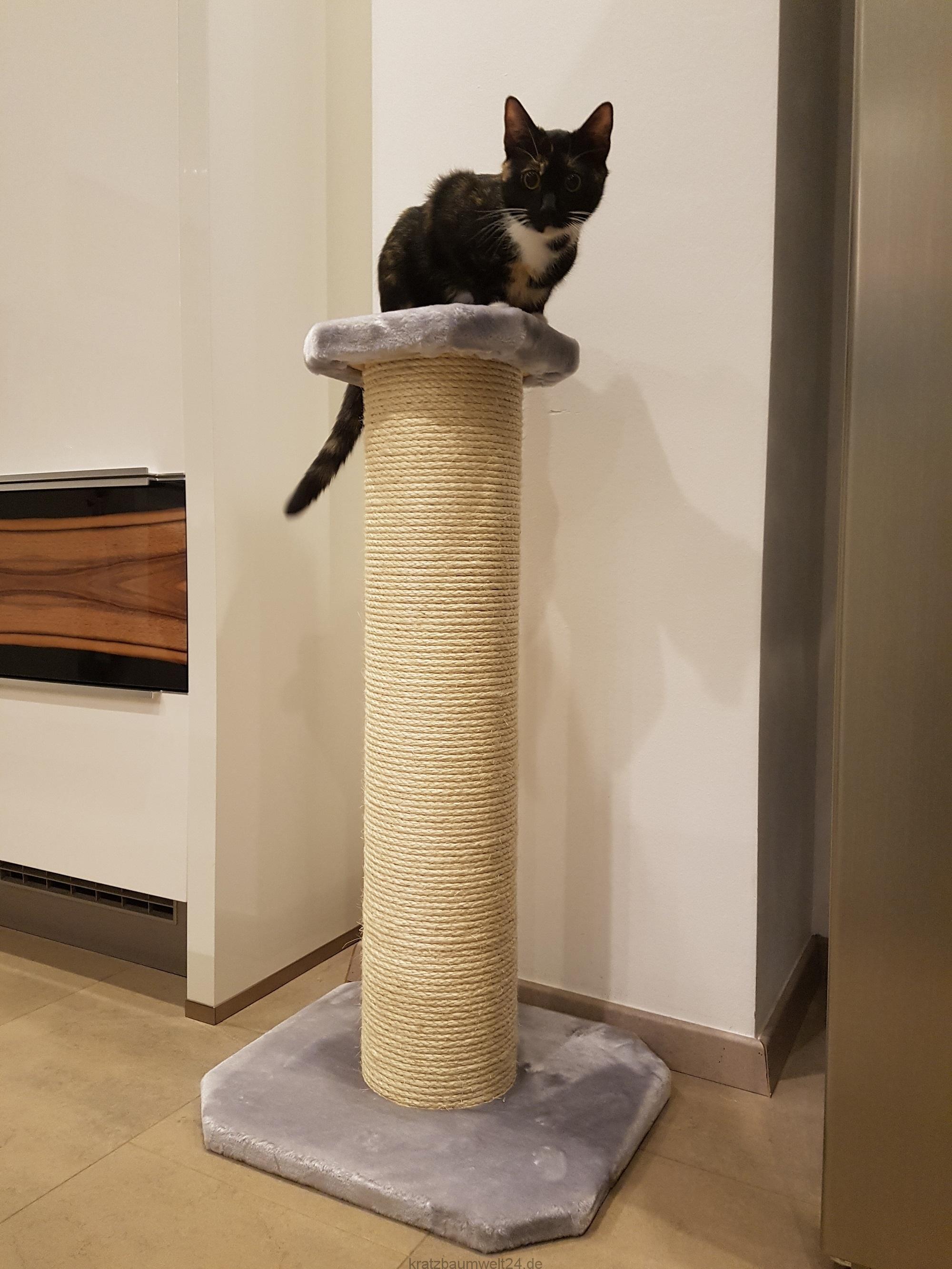 kratzbaum mittel xxl stamm kratzbaum f r kitten kratzbaum klein. Black Bedroom Furniture Sets. Home Design Ideas