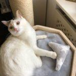 Kuschelbett für Katzen auf Kratztonne