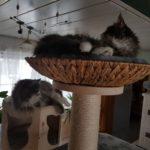 Liegekorb für Katzen auf großen Kratzbaum