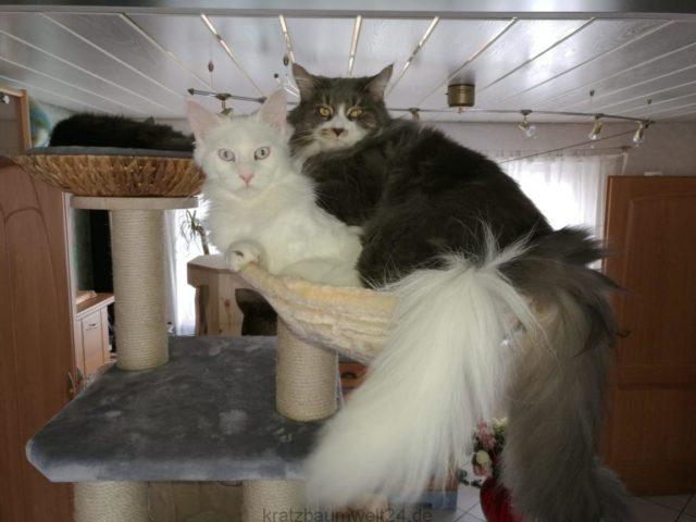 Liegemulde für große Katzen