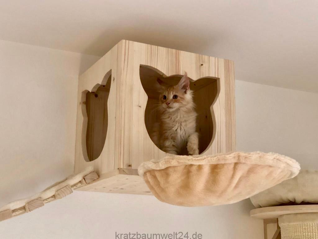 h hle f r katzen catwalk f r katzen kletterparadies f r. Black Bedroom Furniture Sets. Home Design Ideas