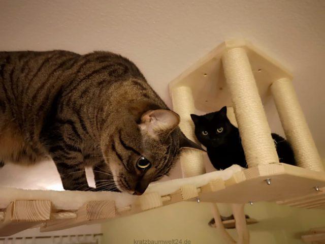 Deckenhalter für Katzen