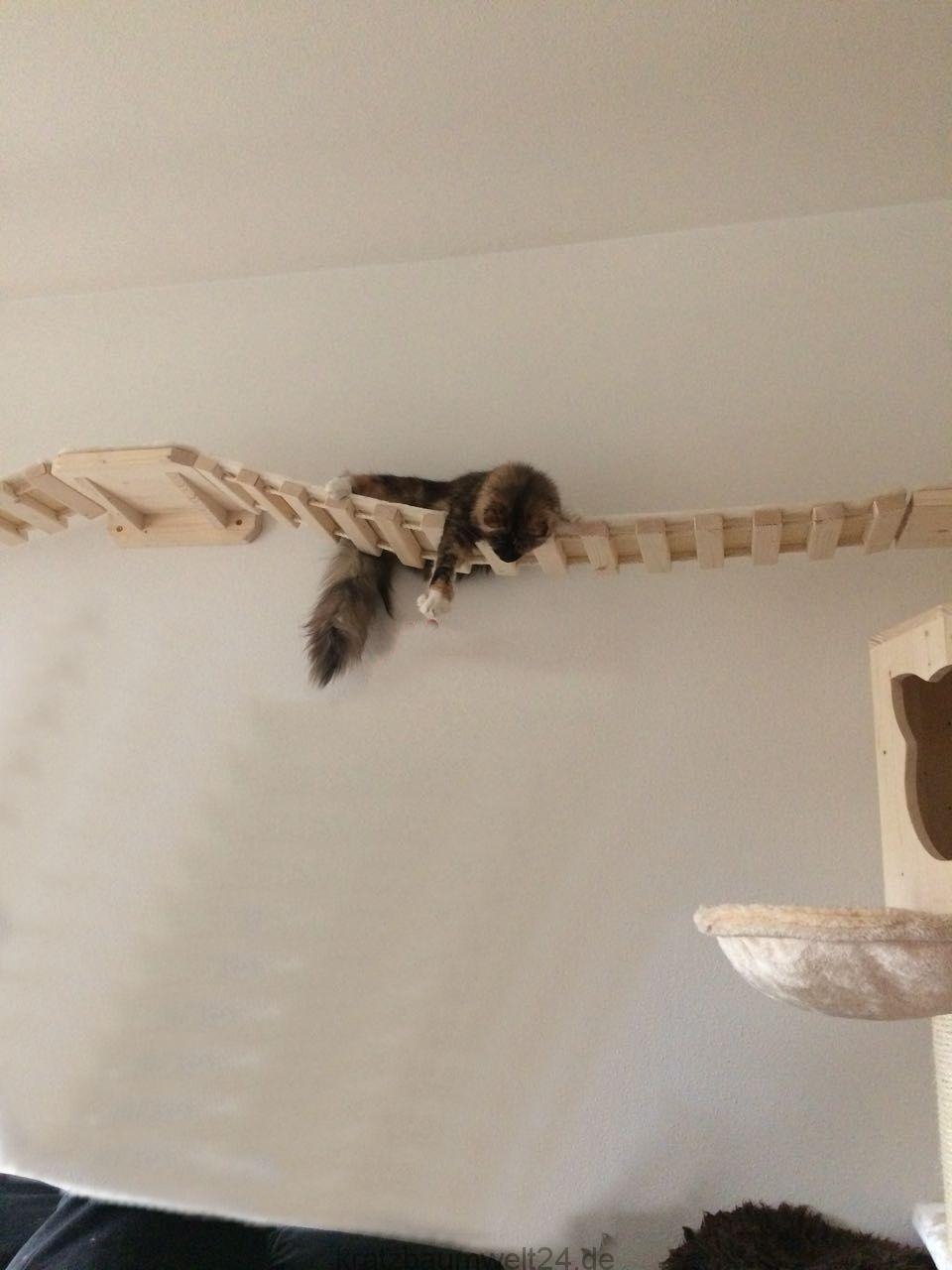 h ngebr cke f r katzen catwalk f r katzen kratzbaum gross. Black Bedroom Furniture Sets. Home Design Ideas