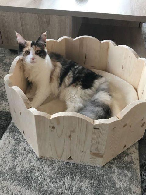 Holzbettchen für Katzen