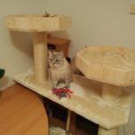 Individuelle Katzenbettchen