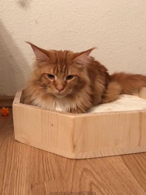 Katzenbettchen