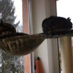 Liegemulde für Katzen