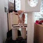 Luxusmöbel für Katzen