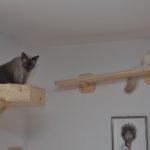 Wandbettchen für Katzen