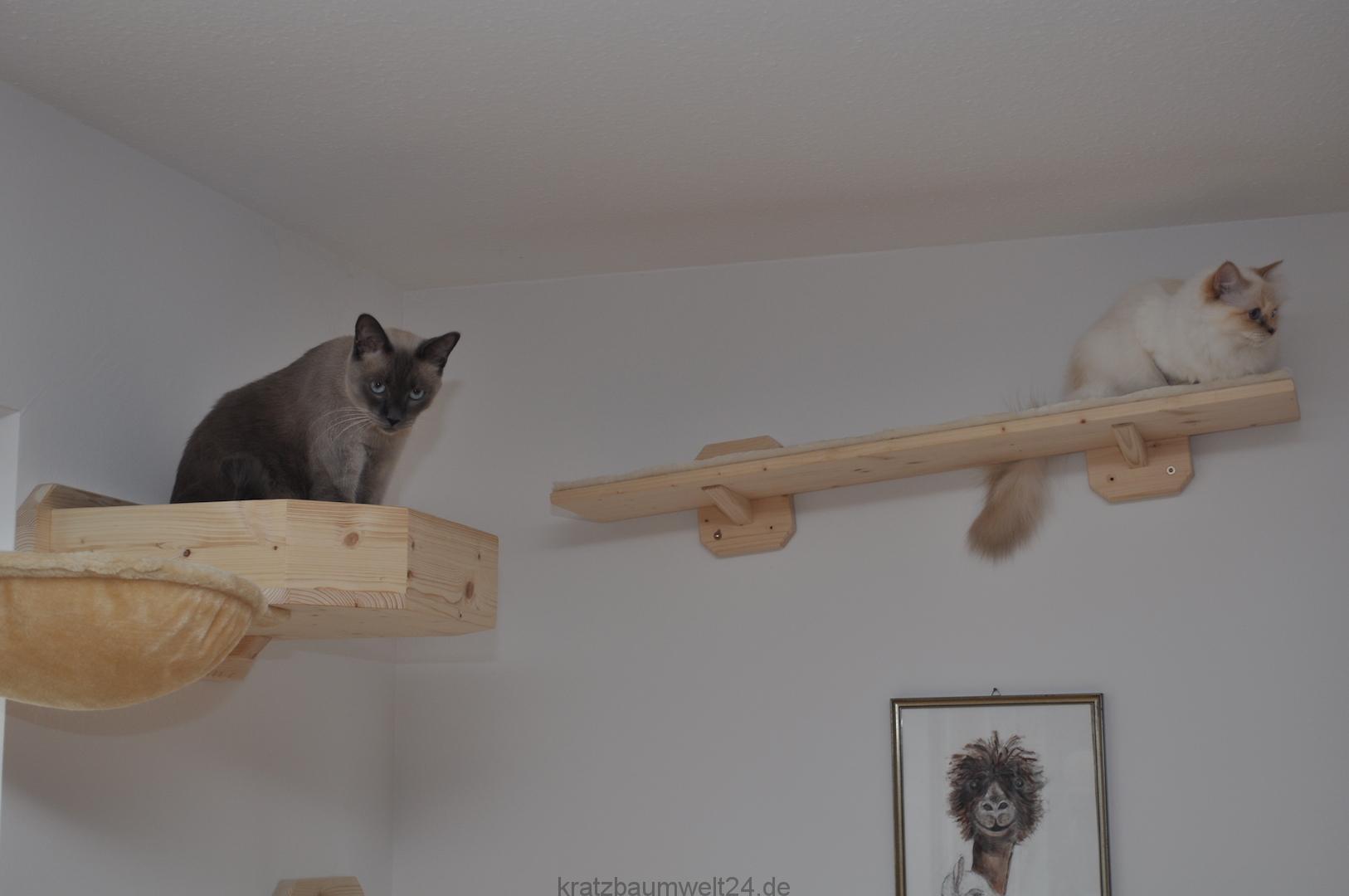wandbettchen f r katzen kletterlandschaft. Black Bedroom Furniture Sets. Home Design Ideas