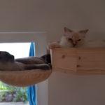 Wandhalterung für Katzen