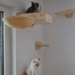 XXL Stamm für Katzen