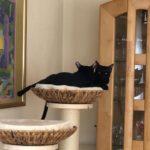 Kuschelbett für Katzen