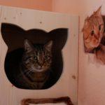 Holzhöhle für Katzen