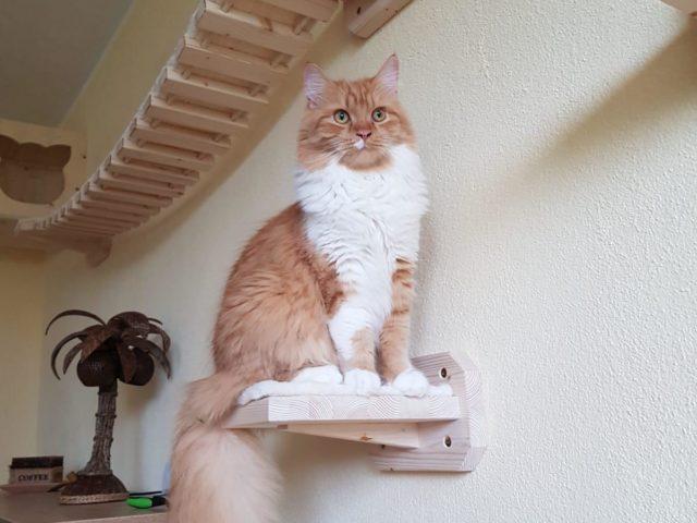 Kletterparadies für Katzen