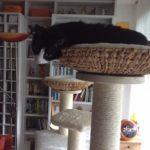 Liegekorb für Katzen