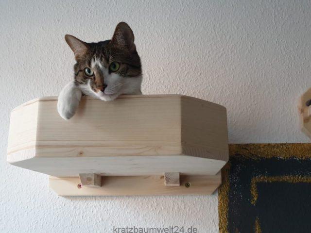 Wandsystem für Katzen