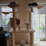 Exklusivmöbel für Katzen