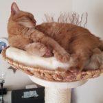 Katze in Liegeschale